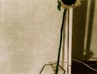 http://sookangkim.com/files/gimgs/th-10_sunflower.jpg