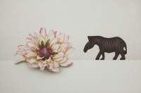 http://sookangkim.com/files/gimgs/th-5_flower-and--zebra.jpg