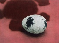 http://sookangkim.com/files/gimgs/th-8_Quail-egg.jpg